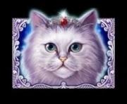 Cutie Cat Slot Machine: simbolo Wild